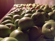 Nava de Francia 02 - Otoño 2013 - Manzanas